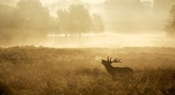 A red deer stag silhouette