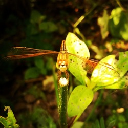 A red dragOn fly looks like a airplane which is ready to takeoff