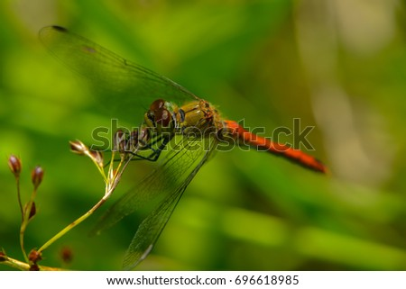 a red dragonfly on a leaf #696618985