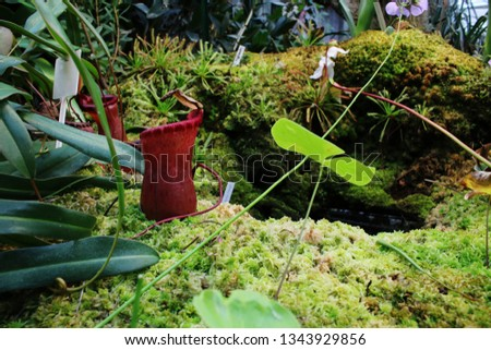 A red flesh eating plant that stands on a bed of green wet moss #1343929856
