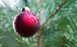 a red glass ball hangs on a tree in the rain