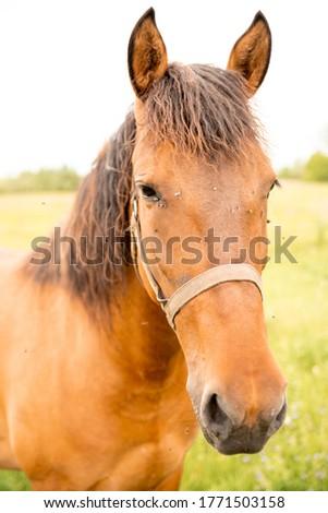A red horse grazes in a green field on a summer day. Rural scene. Stok fotoğraf ©
