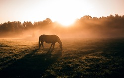 A red horse on the background of an orange sun in a foggy field in the morning
