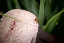 a red ladybug on a tree stump