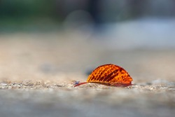 A red leaf fallen on the road in the autumn morning, Korea