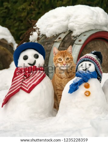 A red orange tabby cat, European Shorthair, and funny snowmen with scarfs and caps in a snow covered garden on a cold winter day