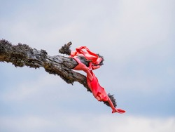 A red ribbon tied to a pine tree flutters in the wind. A pink signal cloth hangs from a branch against a gray, stormy sky. The concept of a traditional wish ritual, a way sign in the forest.