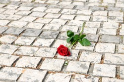 A red rose left on memorial in memory of victims. Symbol of civilian victims of war. Close up of a single rose at the ground in graveyard. Commemoration and remembrance.