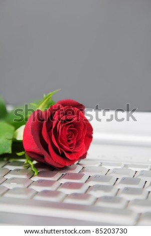 A red Rose on a laptop computer