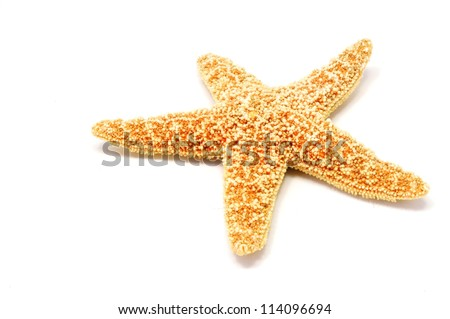 a red sea star isolated on white background
