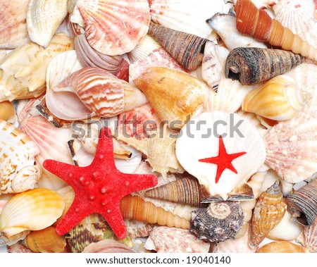 a red starfish and seashells