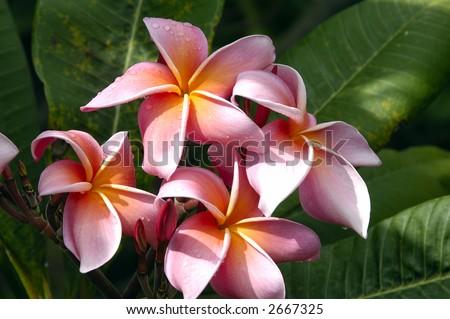 hawaiian flower. tropical hawaiian flower