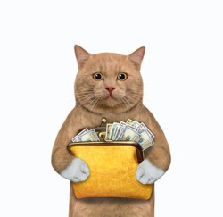 A reddish cat holds an orange leather wallet with dollars. White background. Isolated.