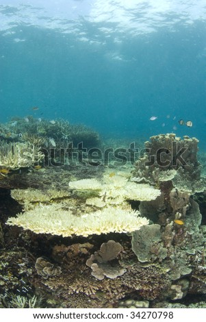 A reef in the Philippines with dead coral, indicative of much of the ocean's reefs and the result of the human impact on the fragile ecosystem