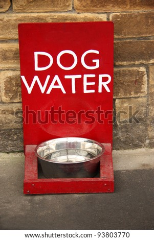 A Refreshing Bowl of Water for any Thirsty Dog.