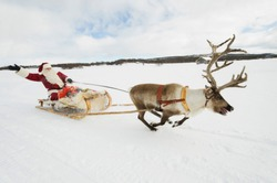 A reindeer pulling Santa Claus and his sleigh of presents through the snow