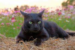 A relaxing black cat at green natural flower garden.