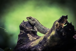 A reptile sitting on a dead tree branch with good skin texture, it's a indian reptile, this animal can change his skin colour every enviourment