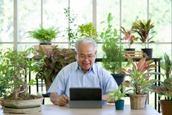 A retired old man use wireless communication via a tablet computer to inquire about indoor garden care from botanist. The morning atmosphere in the greenhouse planting room.