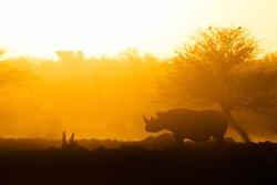 A Rhino in a yellow sunset.