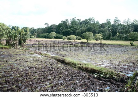A rice paddy prepared for planting in Sri Lanka - stock photo