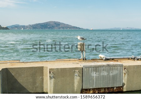 A  ring-billed gull perching on the seaside of the Fisherman's Wharf Pier 39  of San Francisco, California, United states of America