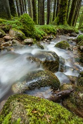 A river flowing over rocks in a Scottish forest during summer showing green moss and clover against a background of trees and woodland