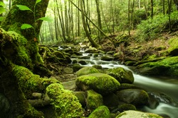 A river flowing through a forest.  Great Smoky Mountains National Park, TN, USA.