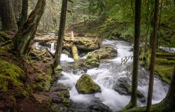 A river stream in a mossy forest. Mossy forest river stream view. River stream in mossy forest. Forest stream