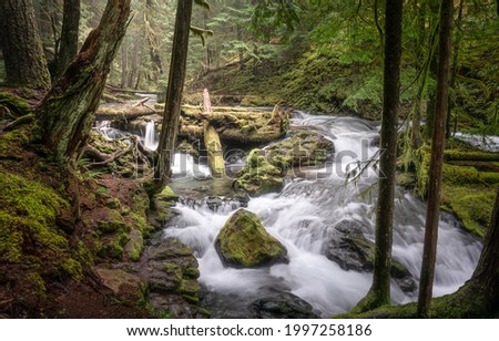 A river stream in a mossy forest. Mossy forest river stream view. River stream in mossy forest. Forest stream Сток-фото ©