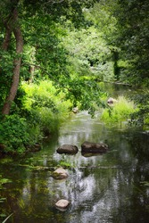 A river through the green trees. Stones in the water. Dark forest scene. Latvia