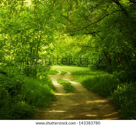 A road in a green forest. Environment protection concept.