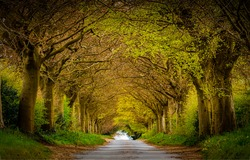 A road in the form of a tunnel made of trees. Road trees tunnel. Tunnel road in trees. Tree tunnel road