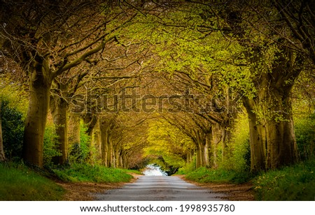 A road in the form of a tunnel made of trees. Road trees tunnel. Tunnel road in trees. Tree tunnel road ストックフォト ©