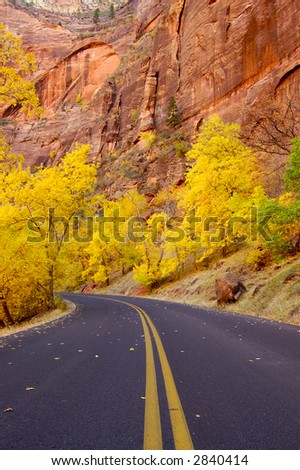 A road in Zion National Park (Utah) - blazing fall colors and fallen leaves on asphalt.