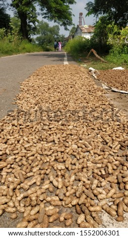 A road on the ground for ground nuts