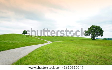 A road on the pasture splits two in the direction of the tree at Schwangau, Bavaria, Germany.