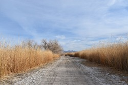 A road with the vast dried field during the daytime