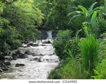 a roadside stream in the rainforest of Costa Rica