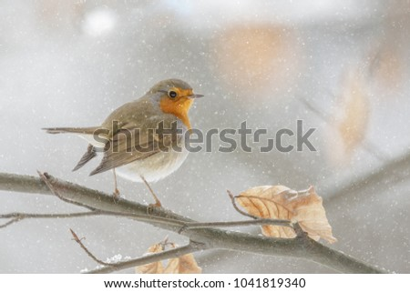 A robin perches among pastel coloured leaves in falling snow