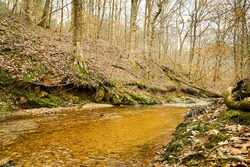 A Rocky Forest Stream in Winter. Mossy Rocks and Ferns Line the Banks of the Creek.