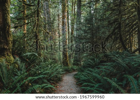 A rocky path, Trail of the Cedars, leads through the giant ferns and giant mossy cedar trees through a forest in North Cascades National Park, Washington, USA. Сток-фото ©