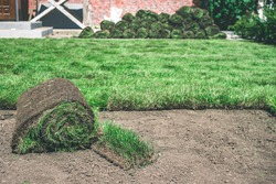 A roll of fresh green grass lies near the lawn on the ground. Delivery and laying of finished lawn rolls. Creating a beautiful green lawn from grass.