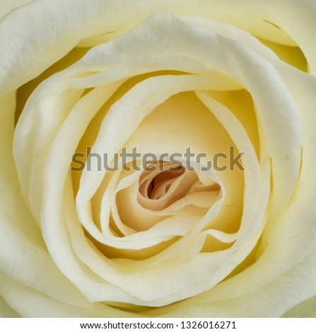 A rose is a rose is a rose #1326016271