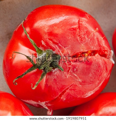 A rotten moldy smashed red tomato top view. Fresh vegetable with desease Foto stock ©