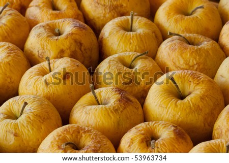 a rotting diseased apples - stock photo