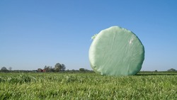 A round wrapped silage bale on the field. The first cut of grass was mowed 2 days earlier, left to dry and then made into bales and wrapped in plastic foil to preserve quality of the forage crop