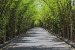 a row of bamboo trees on the side of the road