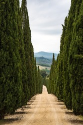 A row of Cypress trees line both sides of a dirt track in Tuscany leading to the hills in the distance.