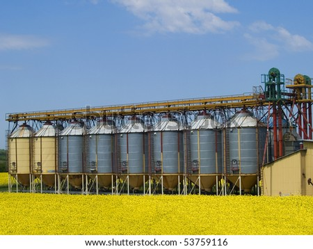 A row of grain silos surrounded by fields of rapeseed